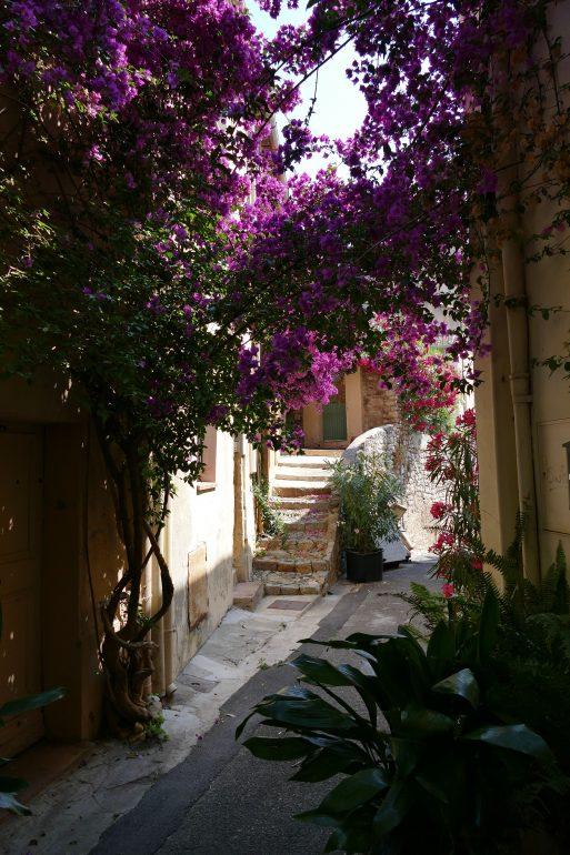 ruelle fleurie - Hyères
