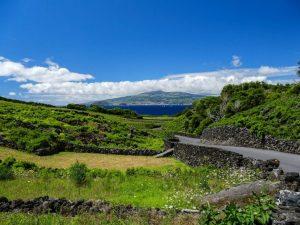 vignes de Pico aux Açores
