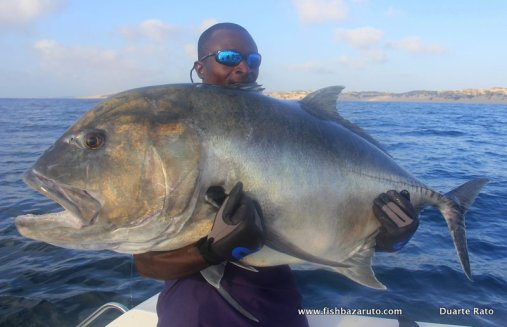 Kingfish this size are as mean as a hotted up marlin