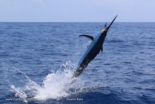 Carl Jankowitz and Duarte Rato taming marlin off Bazaruto Island in Southern Mozambique