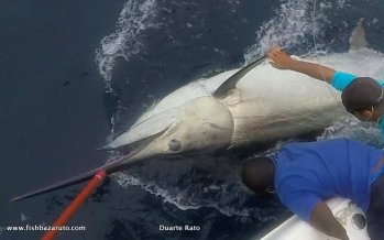 Grander Black Marlin