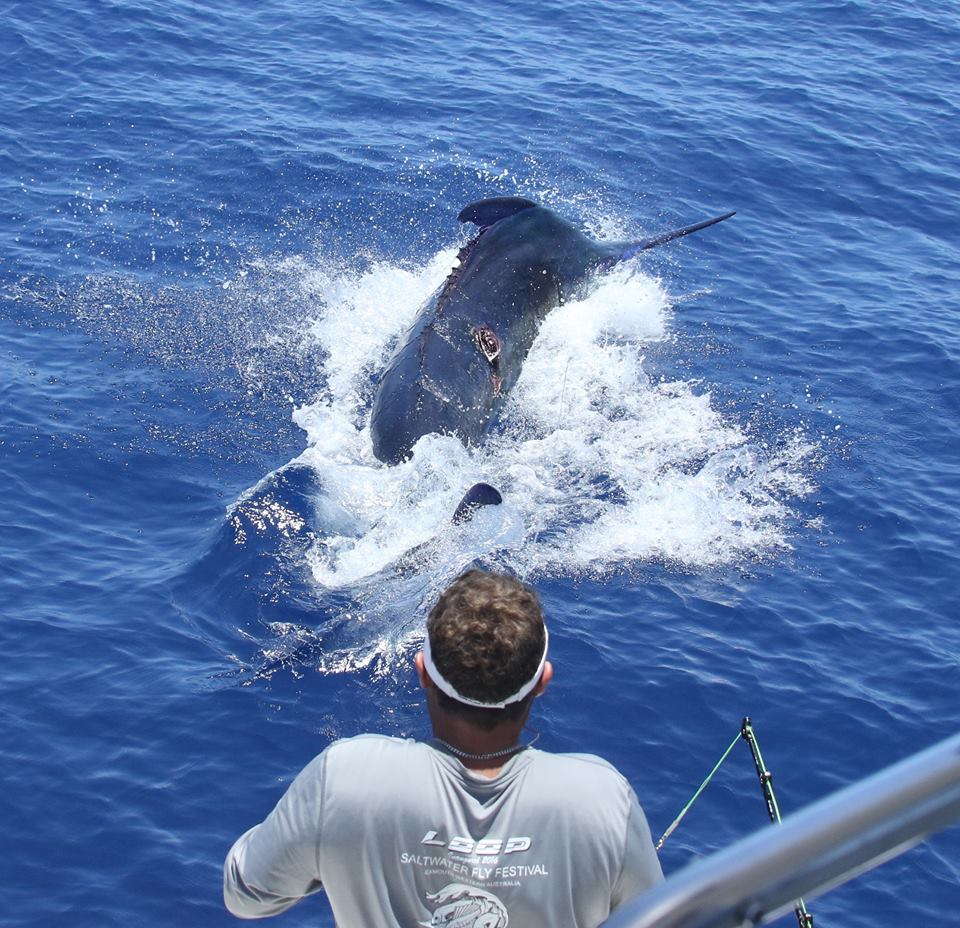 1000lbs Black Marlin on New Years Day
