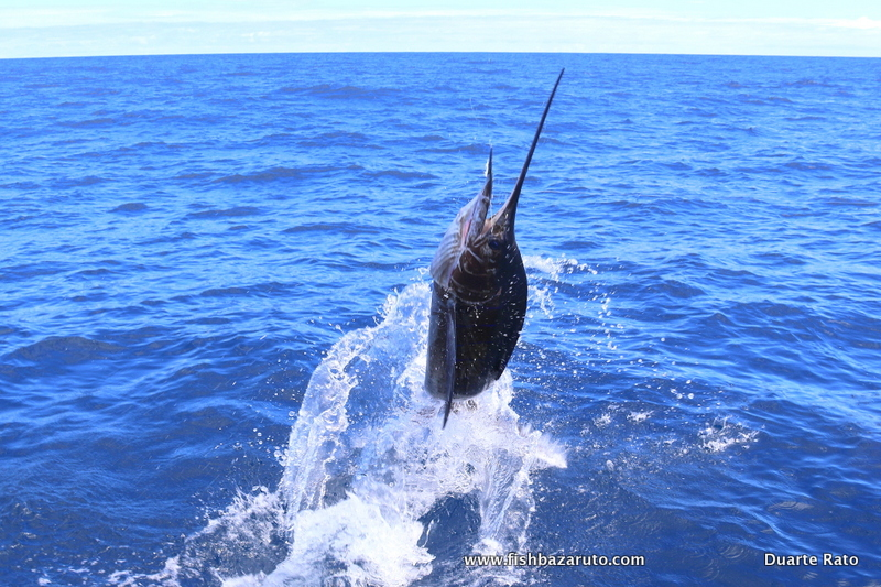 Bazaruto Sailfish Competition 2020 coming up!