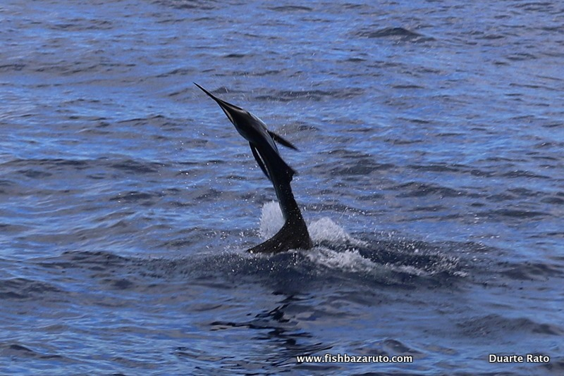 Diablos-first-Mozambique Sailfish caught-and-released-off-Bazaruto-Island