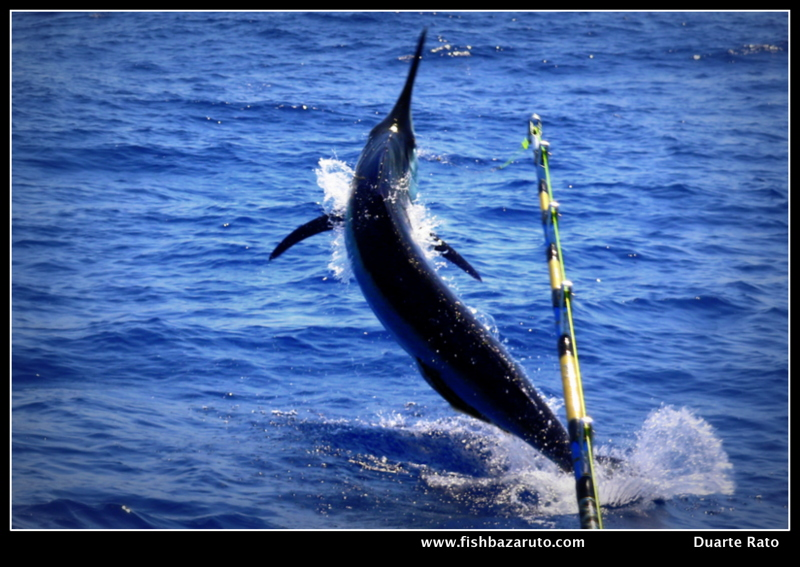 Bazaruto Oct´ 20- Warren´s First Blue and biggest Black Marlin