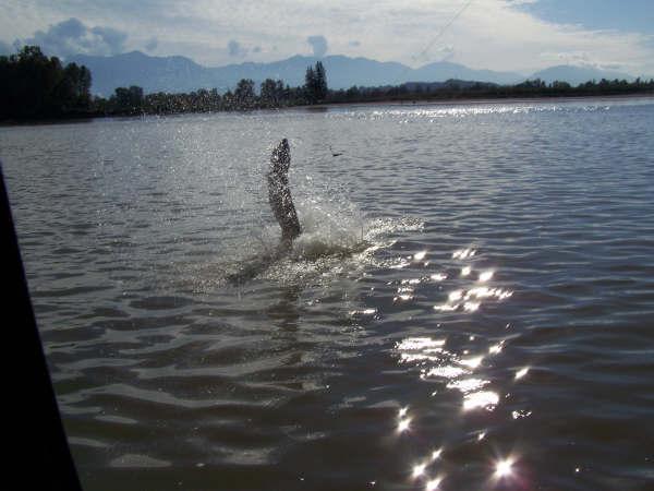 fraser_river_fishing_jump