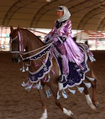 Arabian Horse Dressed