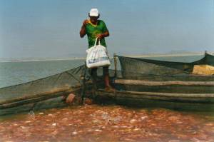 Cage farming of red tilapia (Peru) 03