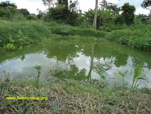 Construction of fish pond in Ghana (02)
