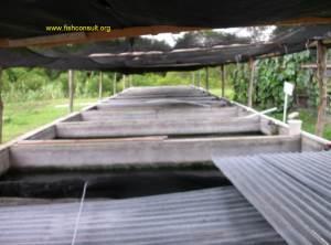 tilapia sex reversal unit (Guatemala)