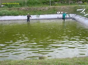 tilapia spawning tank (Guatemala)