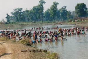 Women in fishery and aquaculture in Nepal (01)