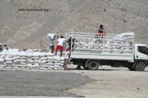 Oman - Dried fish (03)
