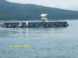 Cage culture in Taal Lake (Philippines) 02