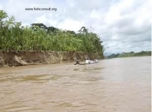 Fishery of River Beni (Bolivia)