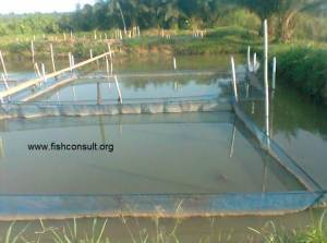 Self securing of farm requirement of tilapia fingerlings in Ghana
