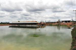 Integrated aquaculture-livestock in Laos
