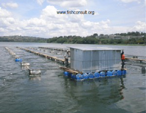 Cage aquaculture in Lake Victoria (Uganda)