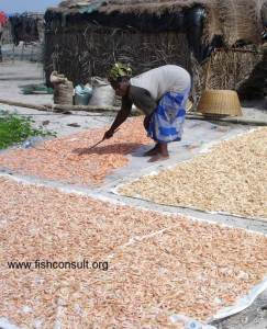 Sun-drying of shrimp in Senegal