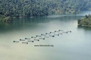Tilapia cage farming in Malaysia 01