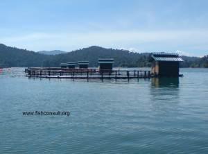 Tilapia cage farming in Malaysia 02