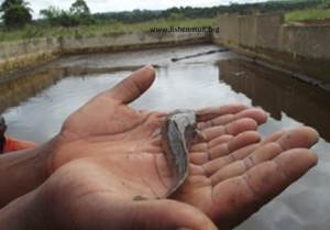 Intensive fish farming project in Congo (01)