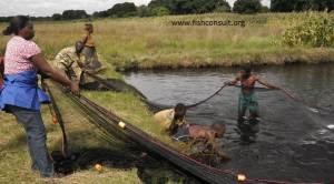 Female fish farmer while managing her fish farm in Zambia