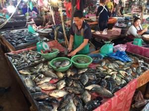 Tilapia display in a fish market in Laos