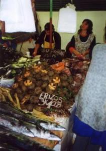 Sea urchin in market in Chile