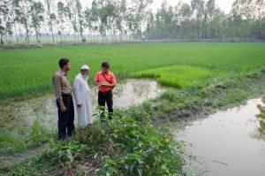 Mola in Bangladesh (01)