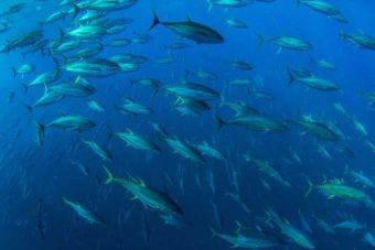 stop illegal fishing in Costa Rica
