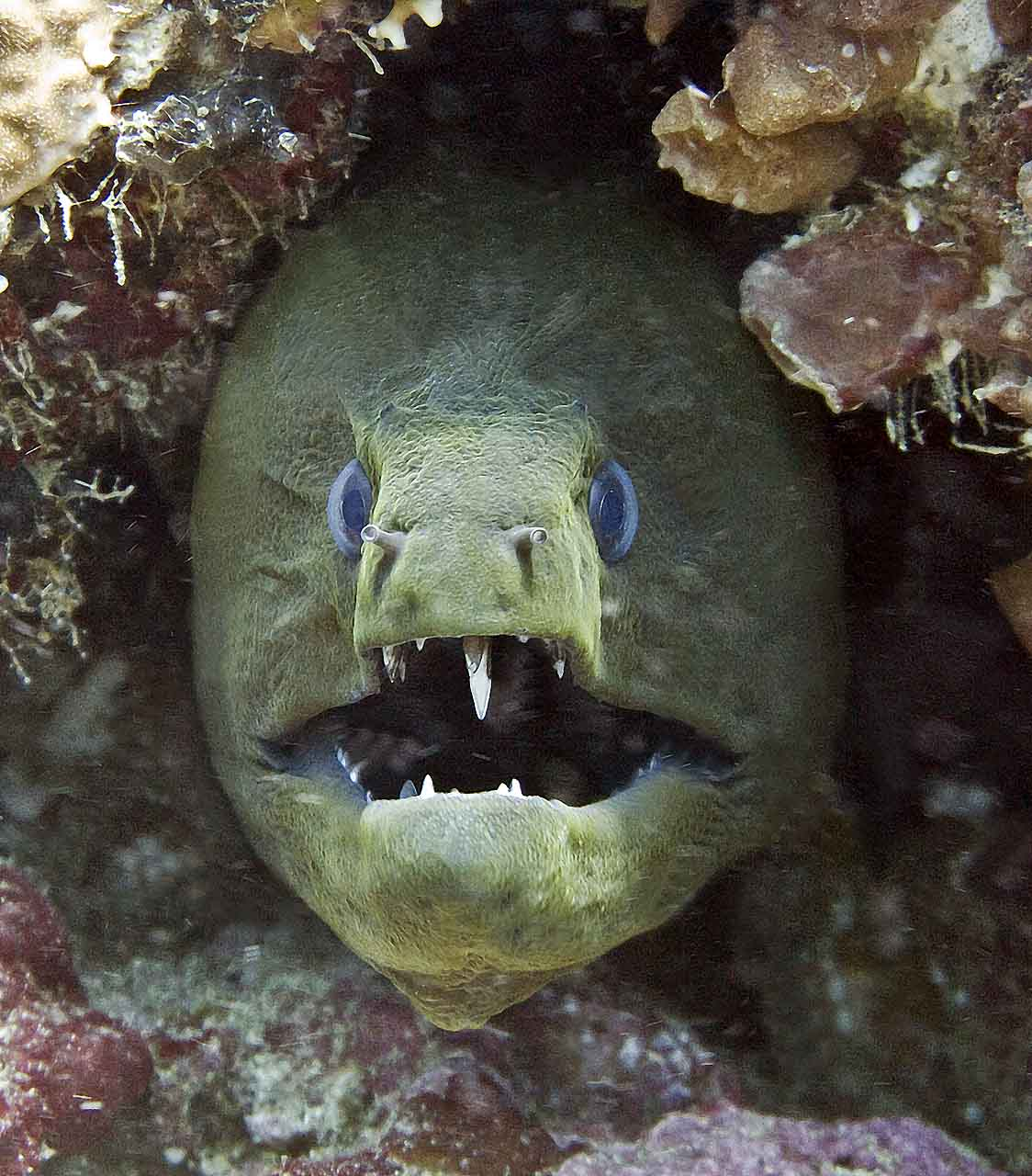 Image result for eel pictures