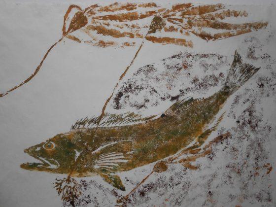 Lingcod and Bullwhip kelp-2