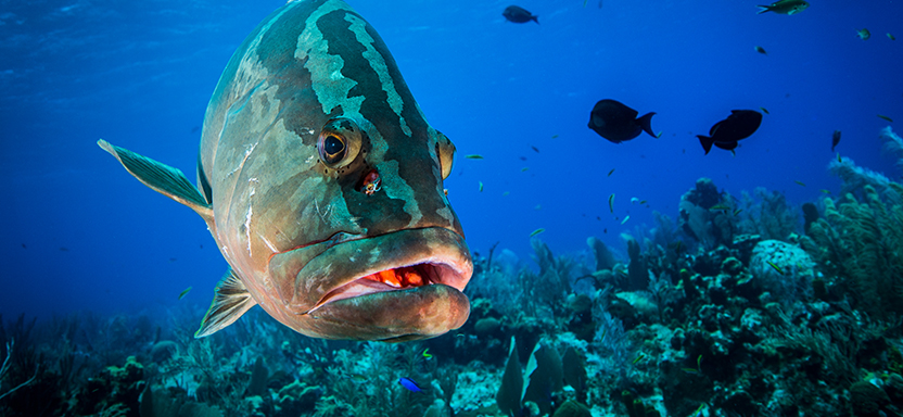"""<a href=""""https://afspubs.onlinelibrary.wiley.com/toc/15488446/current""""><i>Fisheries<i> Magazine </a> slide"""