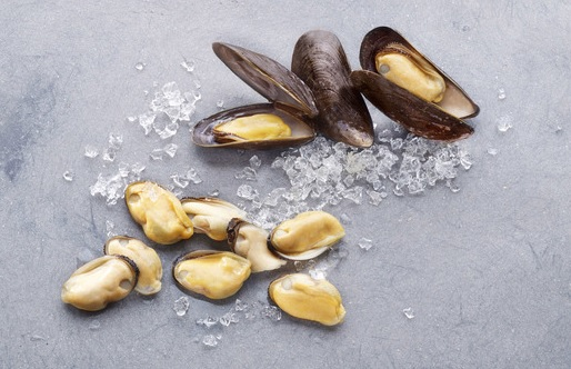 mussel 12