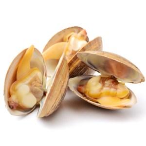 chinese clam 55