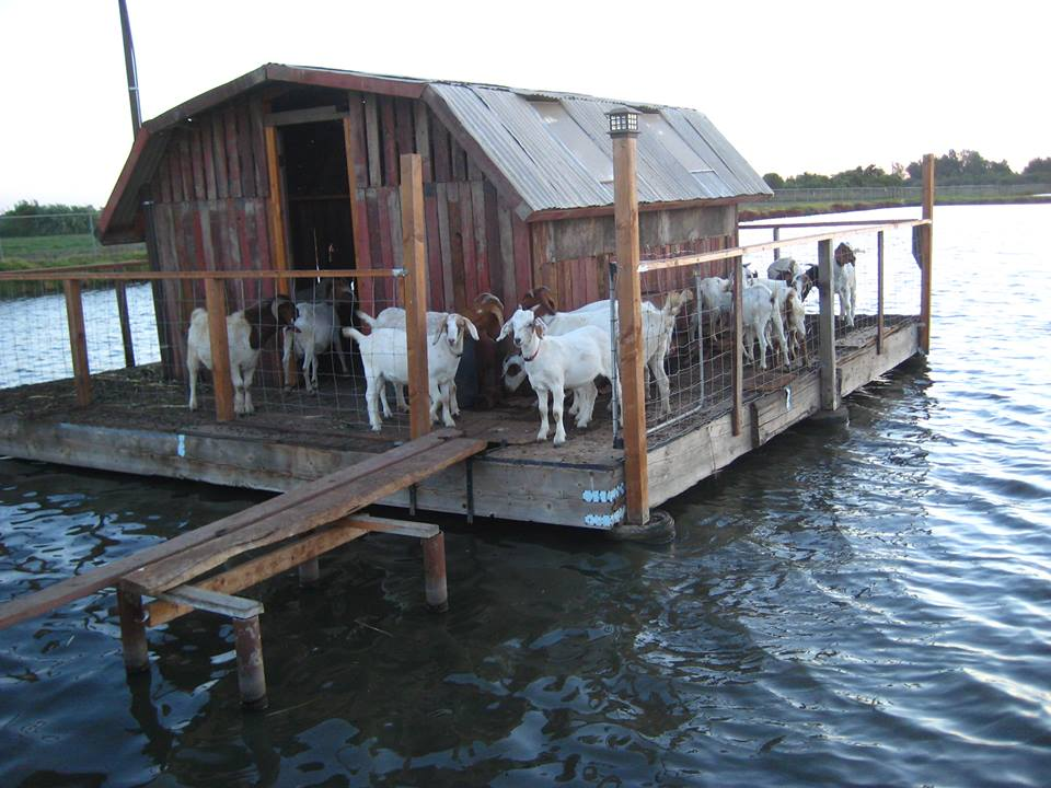goat house pictures goats on goat house little house on the fish