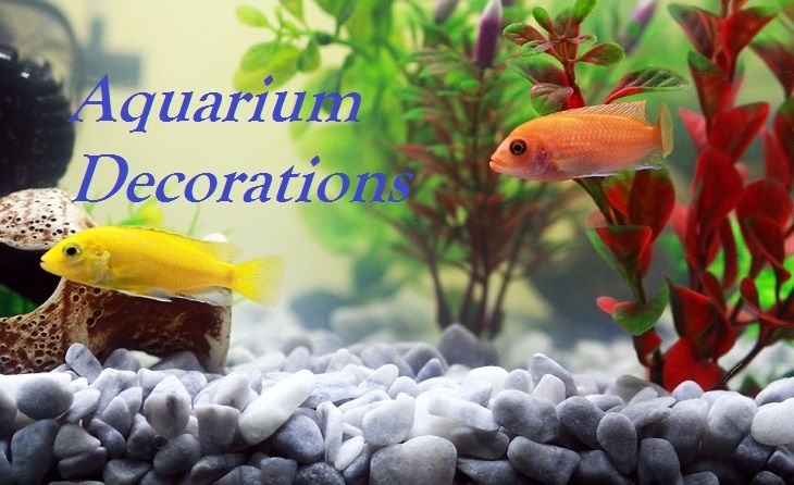 Aquarium and Fish Tank Decoration Ideas