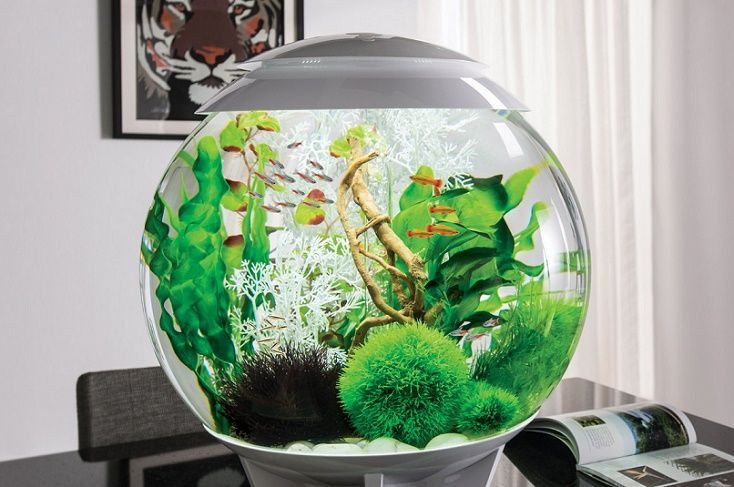 Biorb Fish Tank Review