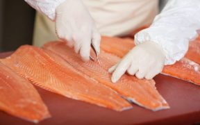 Global Salmon Farming Industry