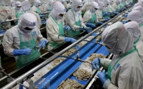 Vietnam seafood processing firms lack materials