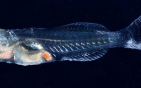 NEW START FOR FISH LARVAE AND FRY