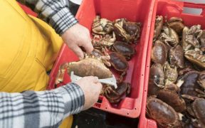 Re-accreditation of sustainable shellfish fisheries