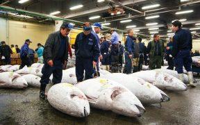 Tsukiji seafood market relocates