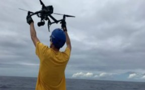 DRONES AID NEW MARINE MAMMAL RESEARCH