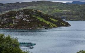 Scots Salmon Farm Report Provides Opportunity