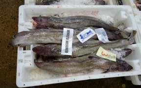 EU FISH COUNCIL TO DECIDE 2019 QUOTAS