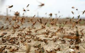 FIRST INDUSTRIAL INSECT PRODUCTION FOR DENMARK