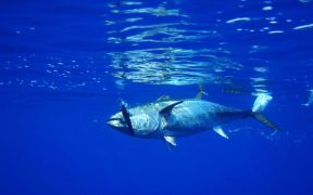 ISSF launches fishery improvement resource
