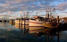 Australian Commercial Fish Stocks Sustainable